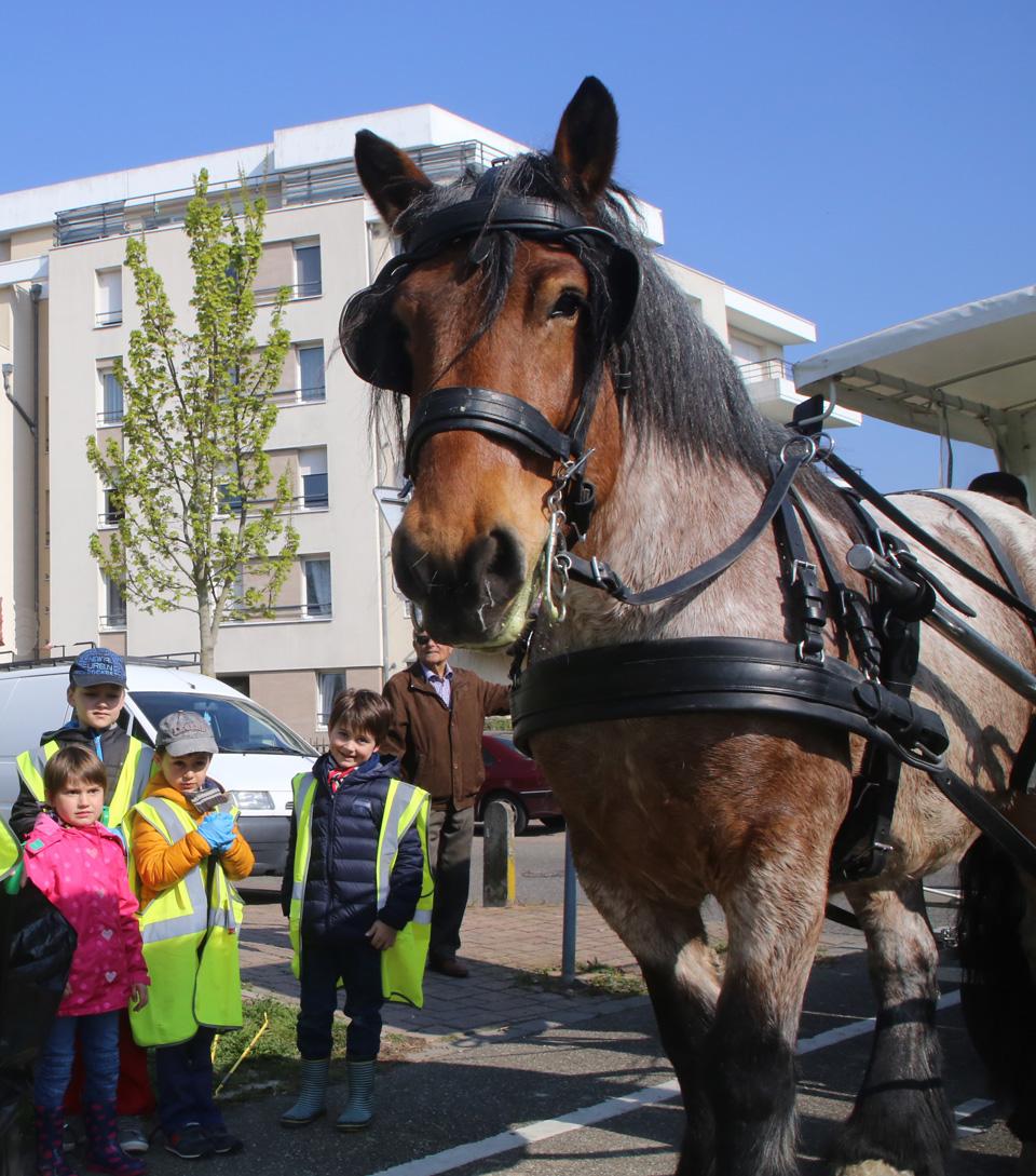 Alsa, le cheval cantonnier à Illkirch-Graffenstaden
