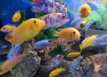 Bourse aux poissons à Illkirch-Graffenstaden