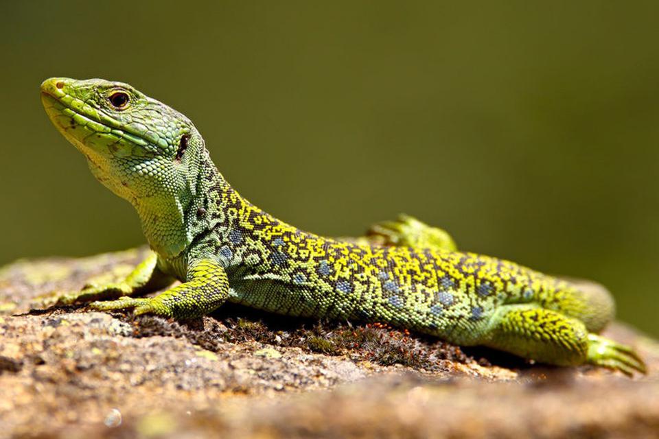 """Conférence """"Mardi Nature"""" sur les serpents et les lézards"""