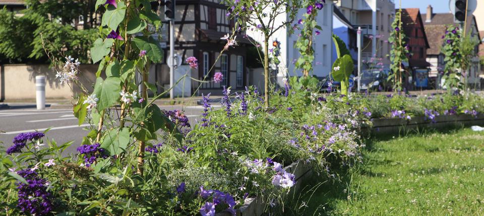 Fleurissement 2017 à Illkirch-Graffenstaden