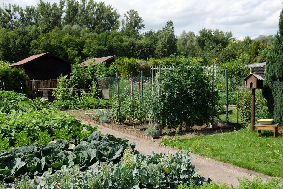 Les jardins familiaux de la ville d 39 illkirch graffenstaden for Les jardins de la ville