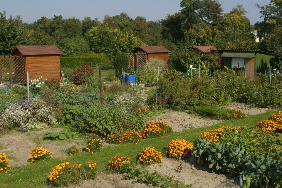 Les jardins familiaux de la ville d 39 illkirch graffenstaden for Jardin familiaux