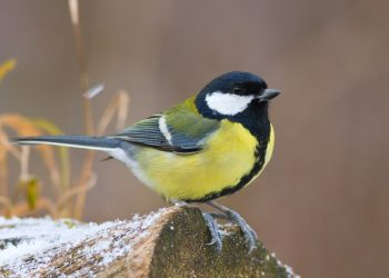 Nourrir les oiseaux en hiver à Illkirch-Graffenstaden