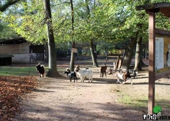 parc-animalier-friedel-illkirch-graffenstaden-1