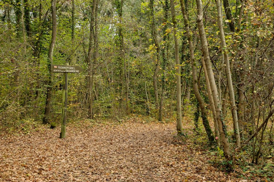 A la découverte de la forêt à Illkirch