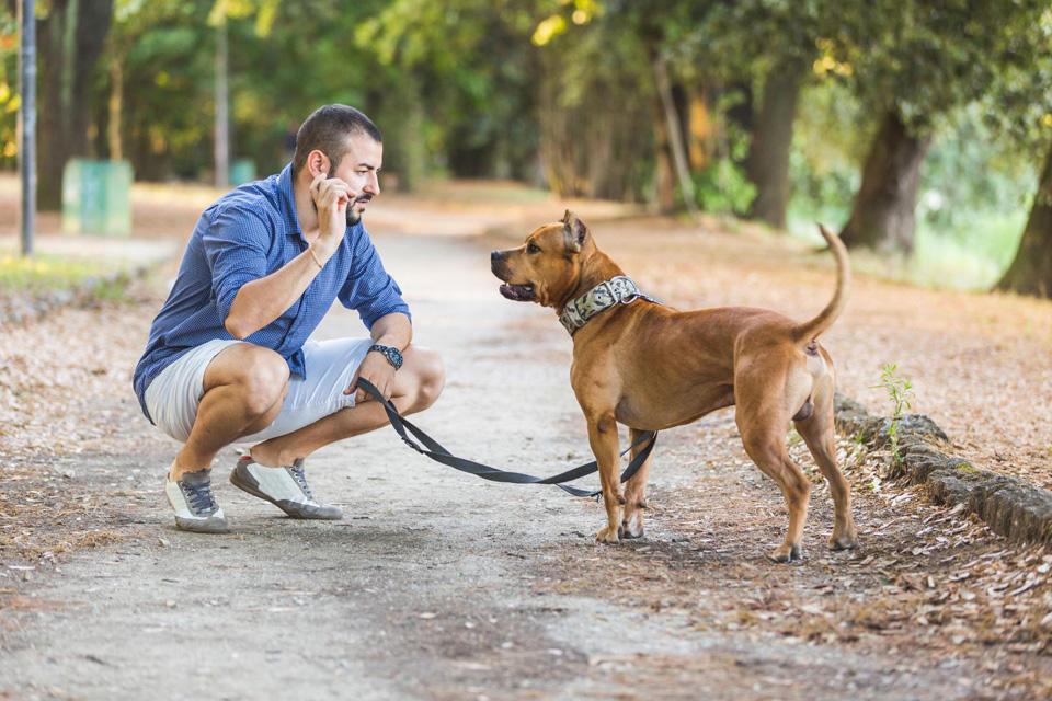 Tenir son chien en laisse à Illkirch-Graffenstaden