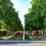 Fleurissement 2018 : 8 - Compositions fleurales du conseil municipal - Pont du Canal