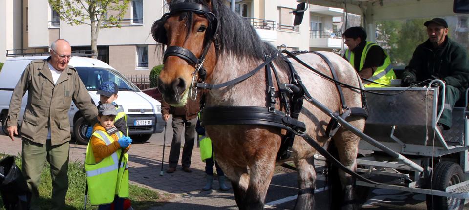 Alsa, le cheval cantonnier d'Illkirch-Graffenstaden