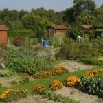 Jardins familiaux à Illkirch-Graffenstaden